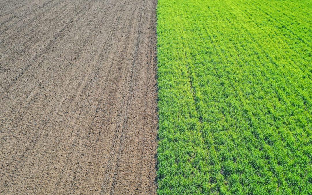 Is Farming Profitable in XXI Century? 2020 Market Analysis